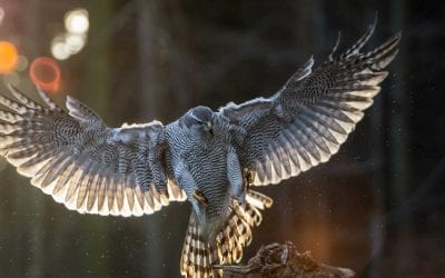Falconry Experiences