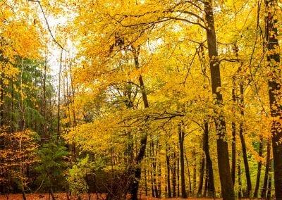 Autumn Break   Forest of Dean   Speech House