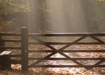 Autumn Break   Leaf Peeping Forest of Dean