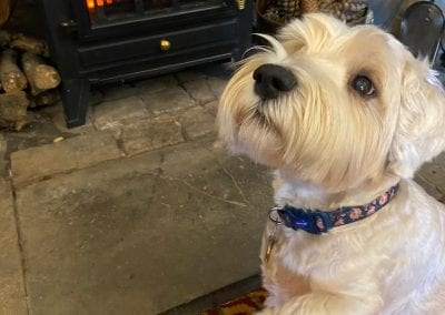 Dog friendly hotel   Autumn Retreat   Forest of Dean